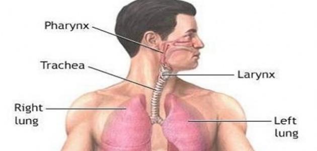 امراض الصدر وكيفية الوقاية منها